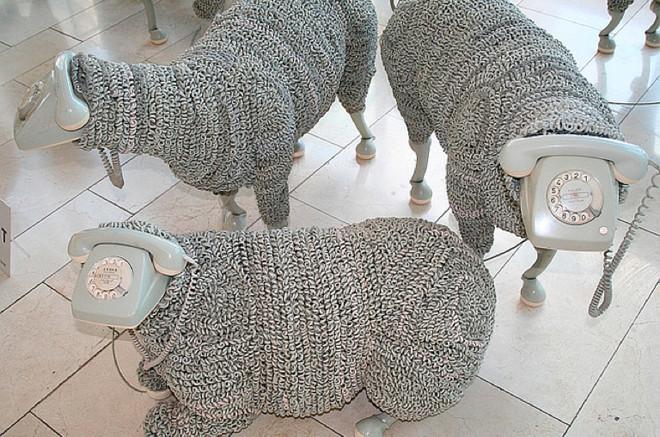odd sheep